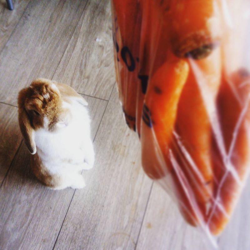 nanotherabbit standuprabbit carrotjunkie